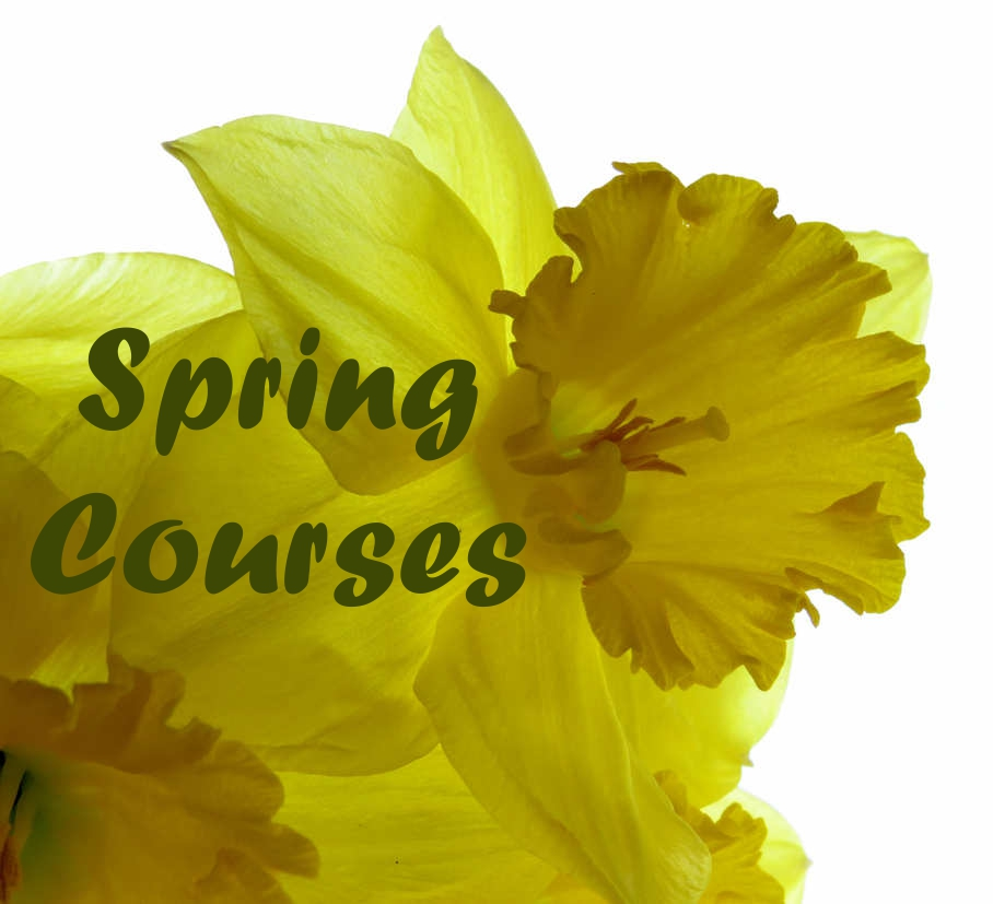 Spring Courses Daffodil Green Text